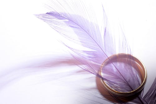Purple Feather in Gold-colored Ring on White Surface