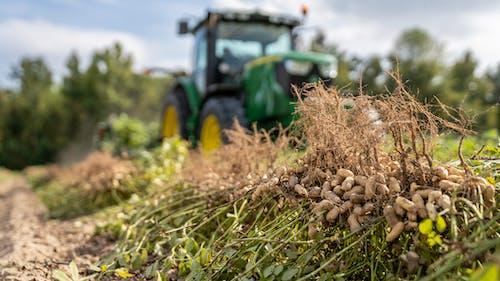 agbiopix, ピーナッツの収穫の無料の写真素材