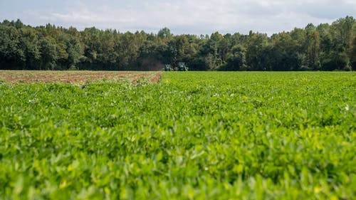 agbiopix, ピーナッツ畑の無料の写真素材