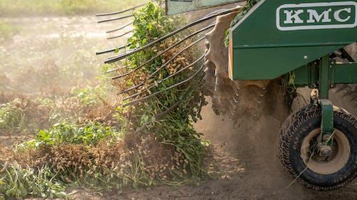 agbiopix, トラクター, ピーナッツの収穫の無料の写真素材