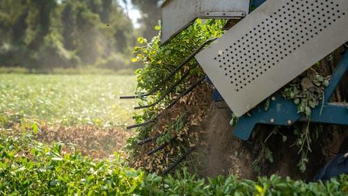 agbiopix, ピーナッツの収穫, フードの無料の写真素材