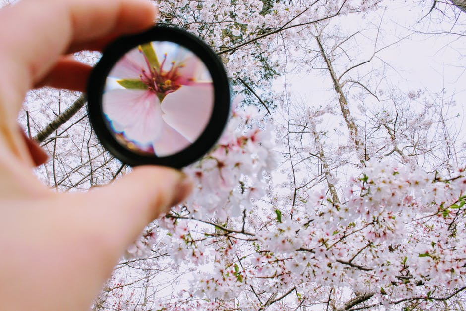 Person holding round framed mirror near tree at daytime