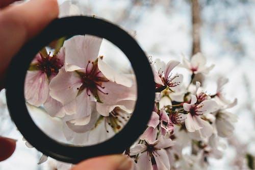 Fotos de stock gratuitas de bonito, brillante, cerezos en flor, crecimiento