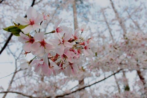 Gratis lagerfoto af blomster, blomstrende, close-up, dayt