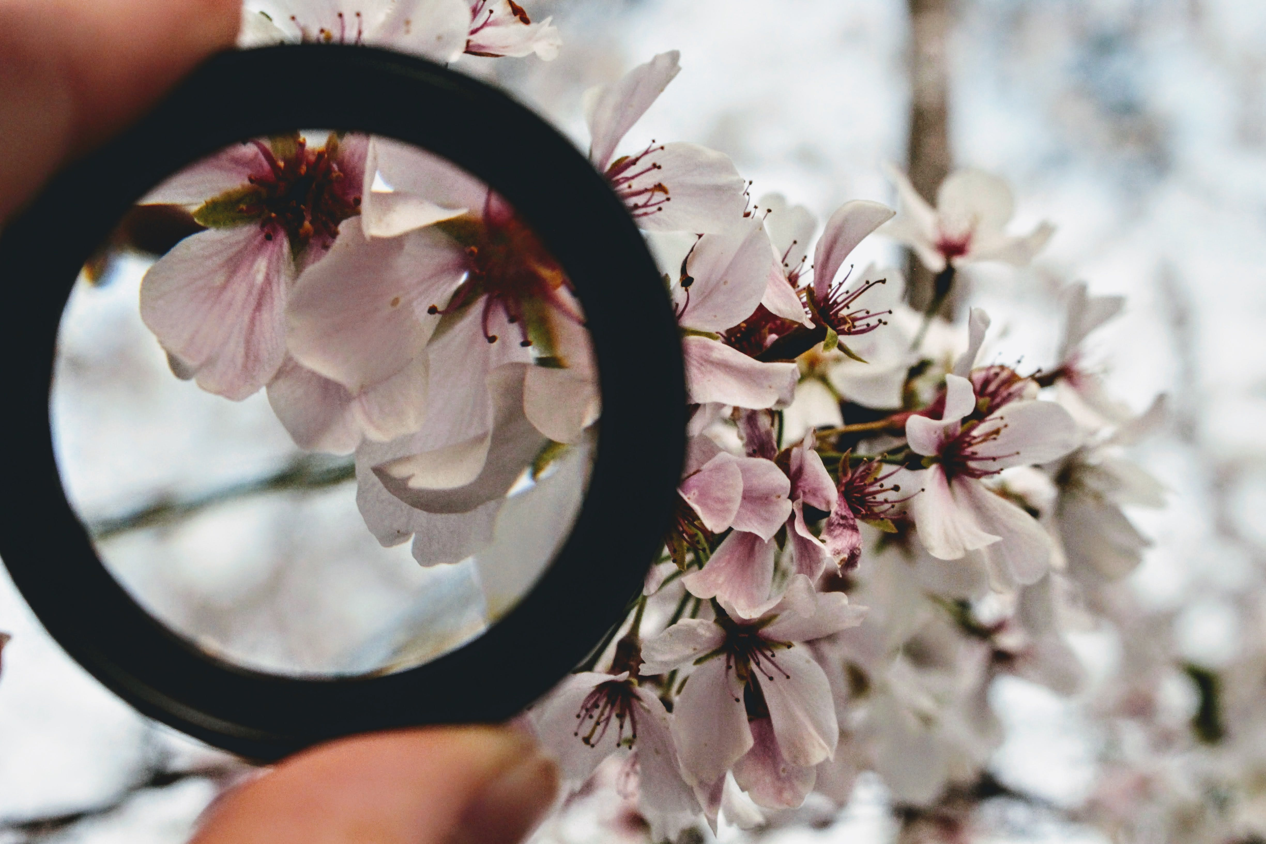 Black Ring in Front of White Orchid Selective Focus Photography