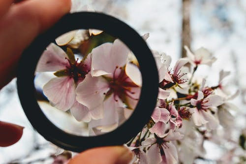 Person Holding Round Black Ring Through Pink Petaled Flowers