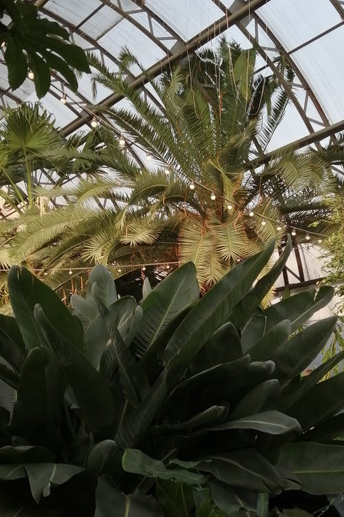 Immagine gratuita di agricoltura, albero, botanico
