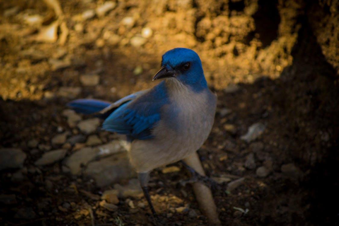 природа, Хищная птица