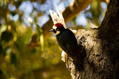 Бесплатное стоковое фото с природа, Птичье гнездо, с высоты птичьего полета