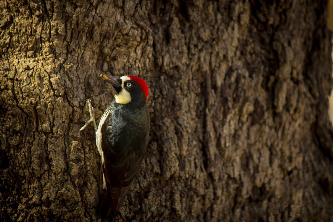 природа, резьба по дереву