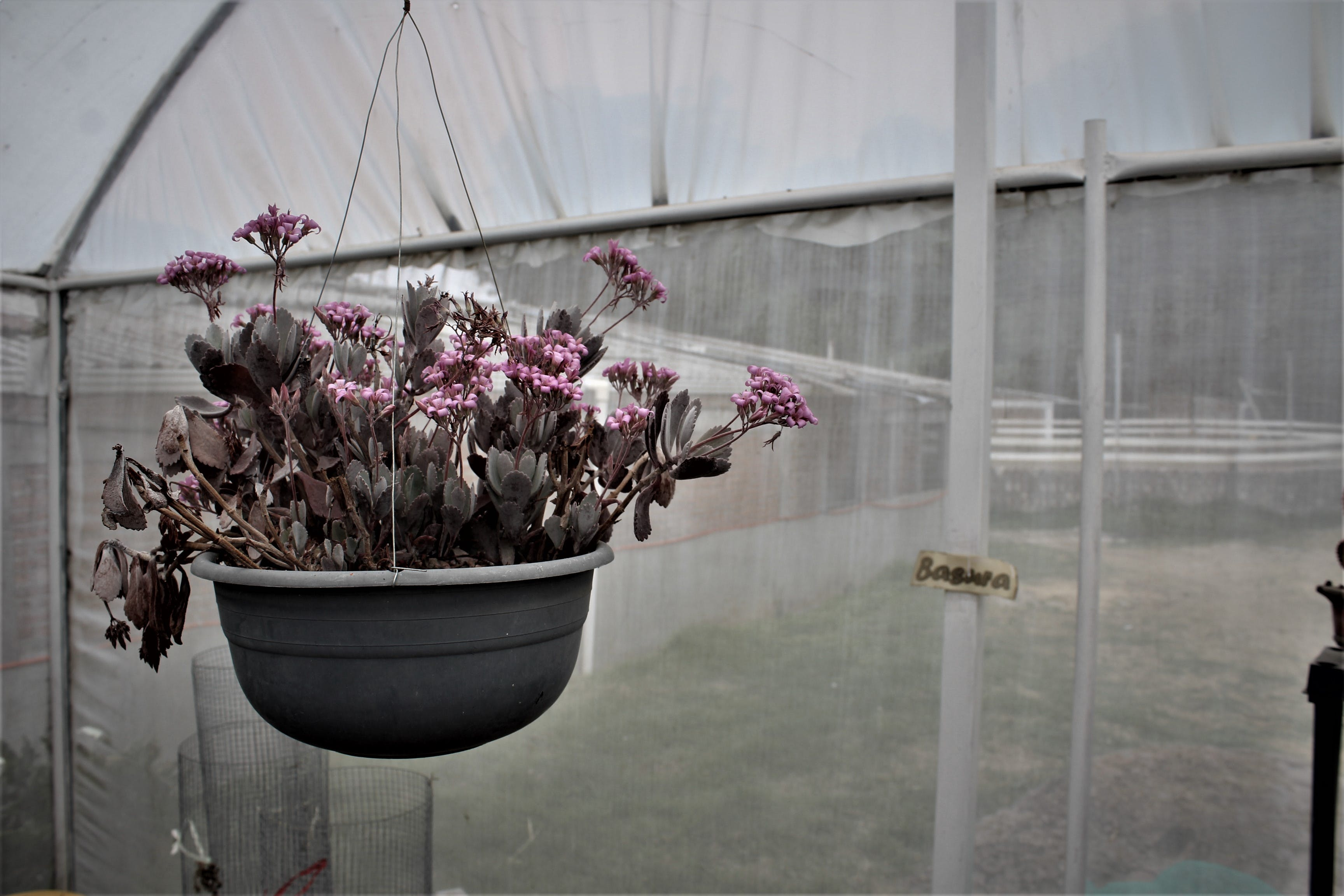 Free stock photo of autumn, fall, flower garden, garden