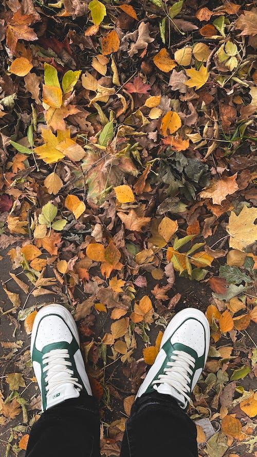 Foto stok gratis berjalan, daun, di luar rumah