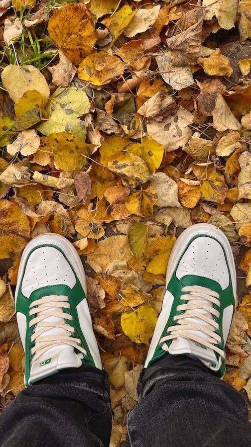 Foto stok gratis berjalan, daun, di luar