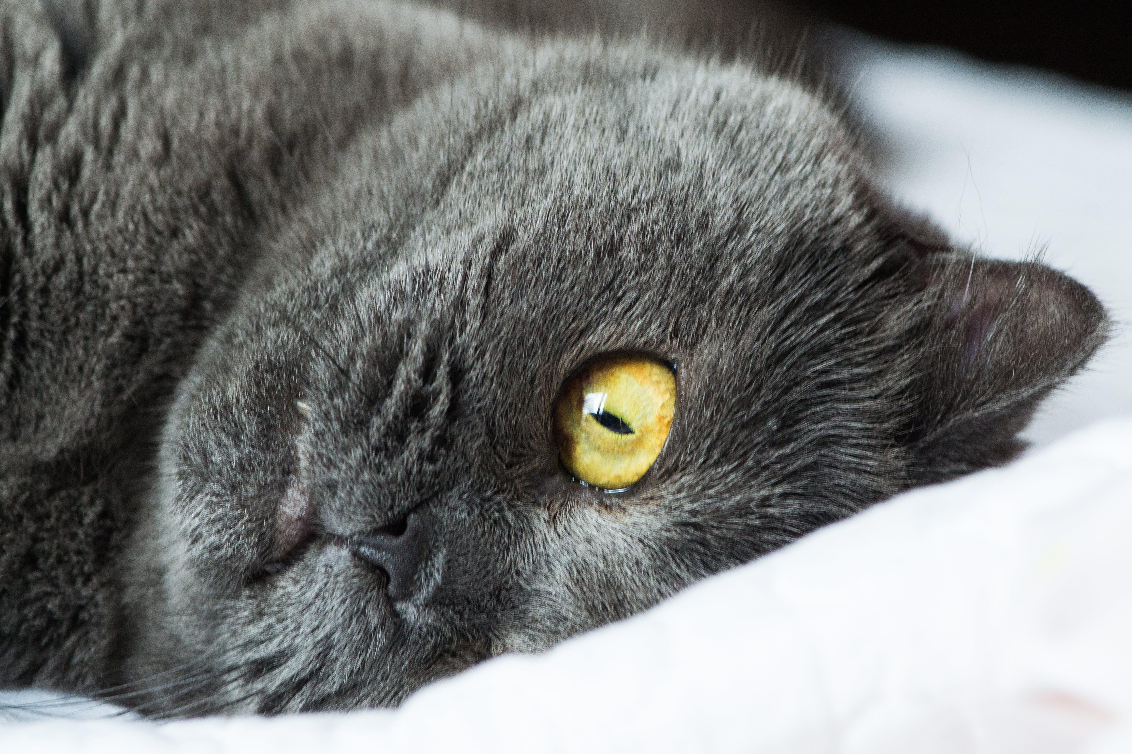 Close Up Photo Of Black Cat