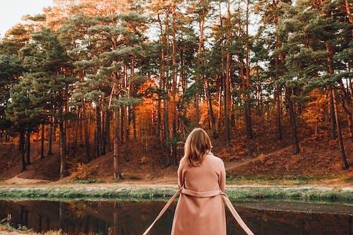 ağaç, atmosfera de outono, ceket içeren Ücretsiz stok fotoğraf