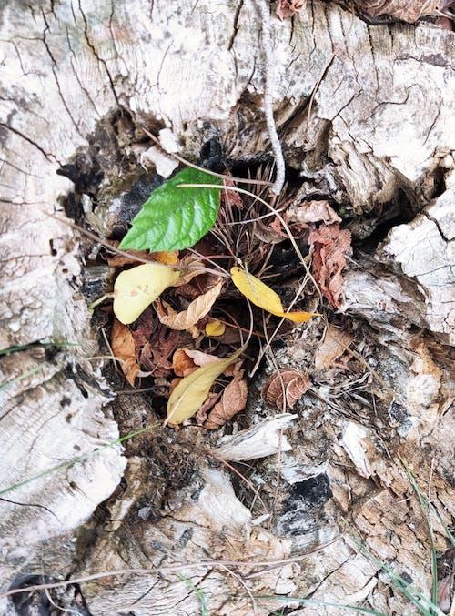 Free stock photo of autumn leaf, fall leaf