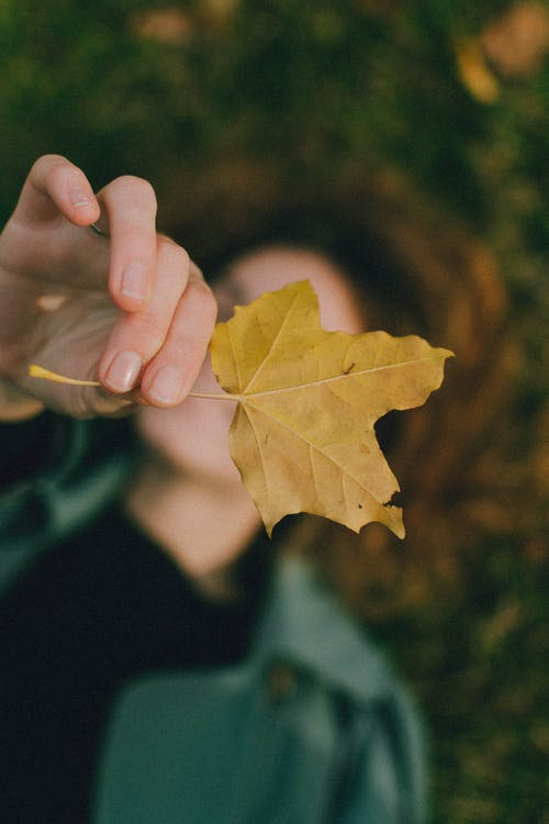 Hand of unrecognizable person holding yellow maple leaf