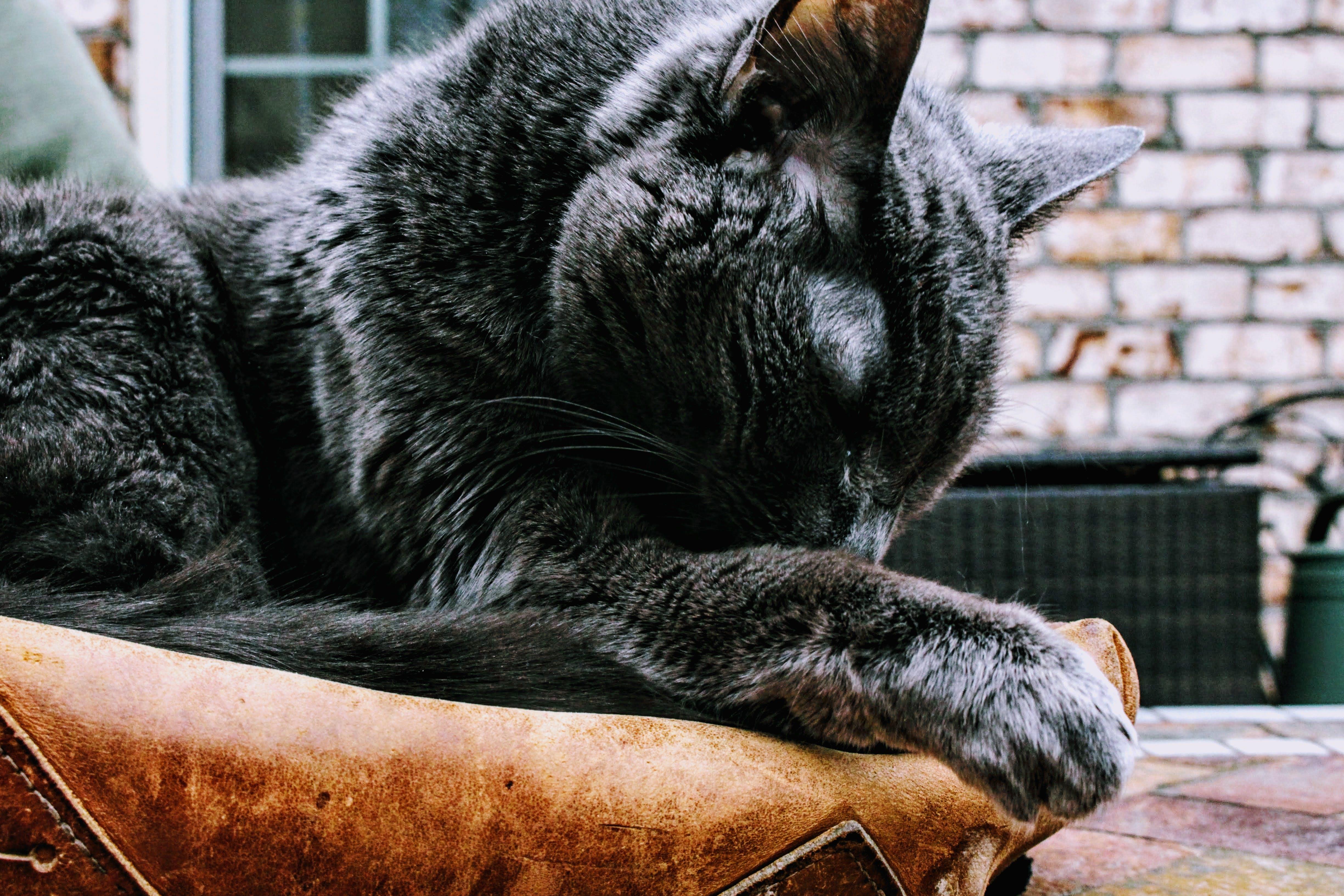 Photo of Black Cat on Brown Pad