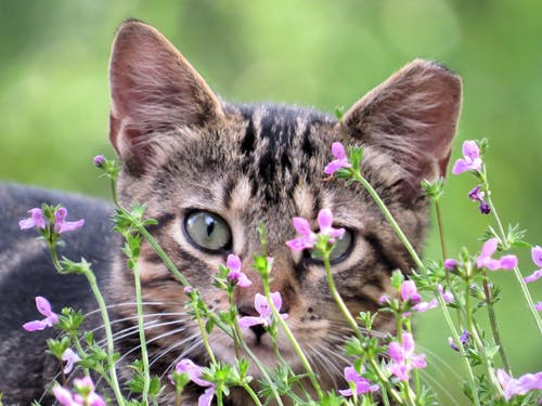 Free stock photo of feral cat, flower bed, kitten