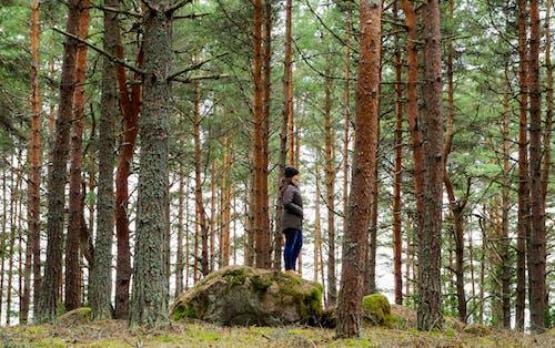 Kostenloses Stock Foto zu Äste, bäume, baumrinde, baumstämme