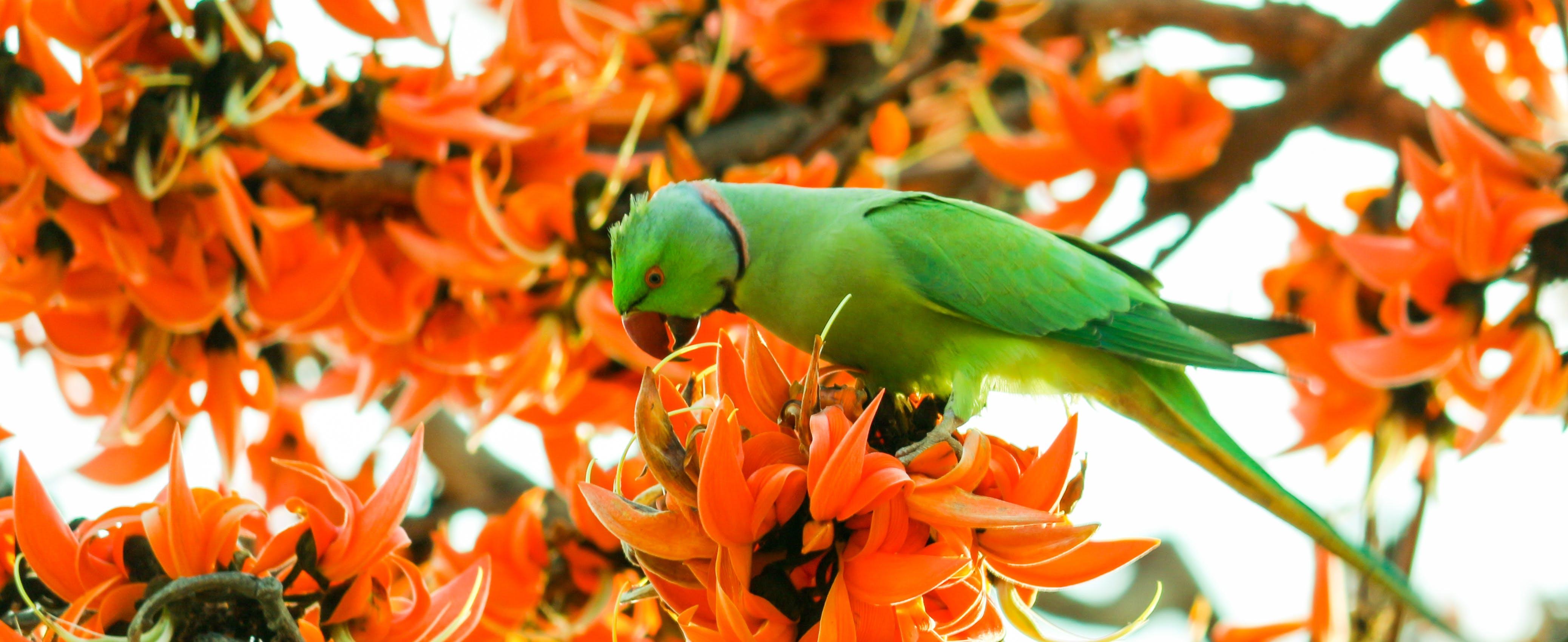 Free stock photo of beautiful, beautiful flowers, parrot, winter landscape