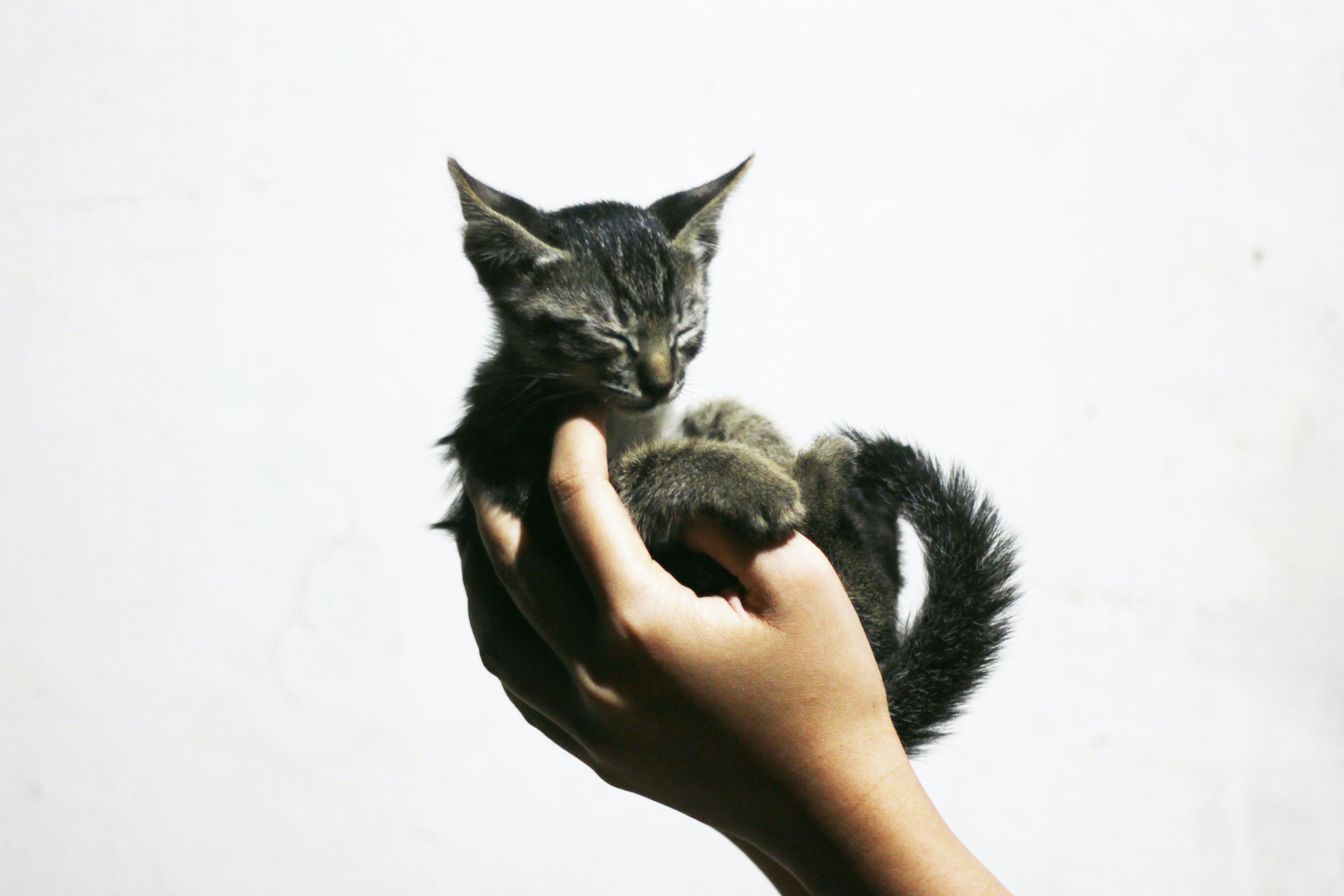 Free stock photo of animal photography, animal portrait, animals, cat