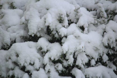Free stock photo of snow, white, winter