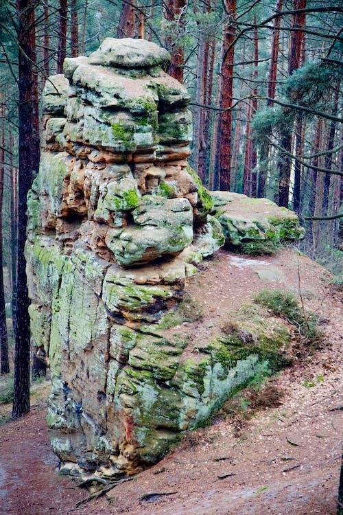 árvores, caminho, ecológico