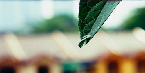Kostnadsfri bild av fallna löv