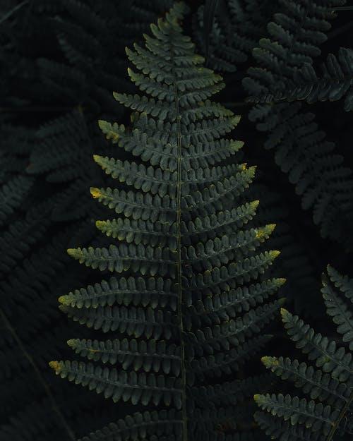 Photo of fern leaves