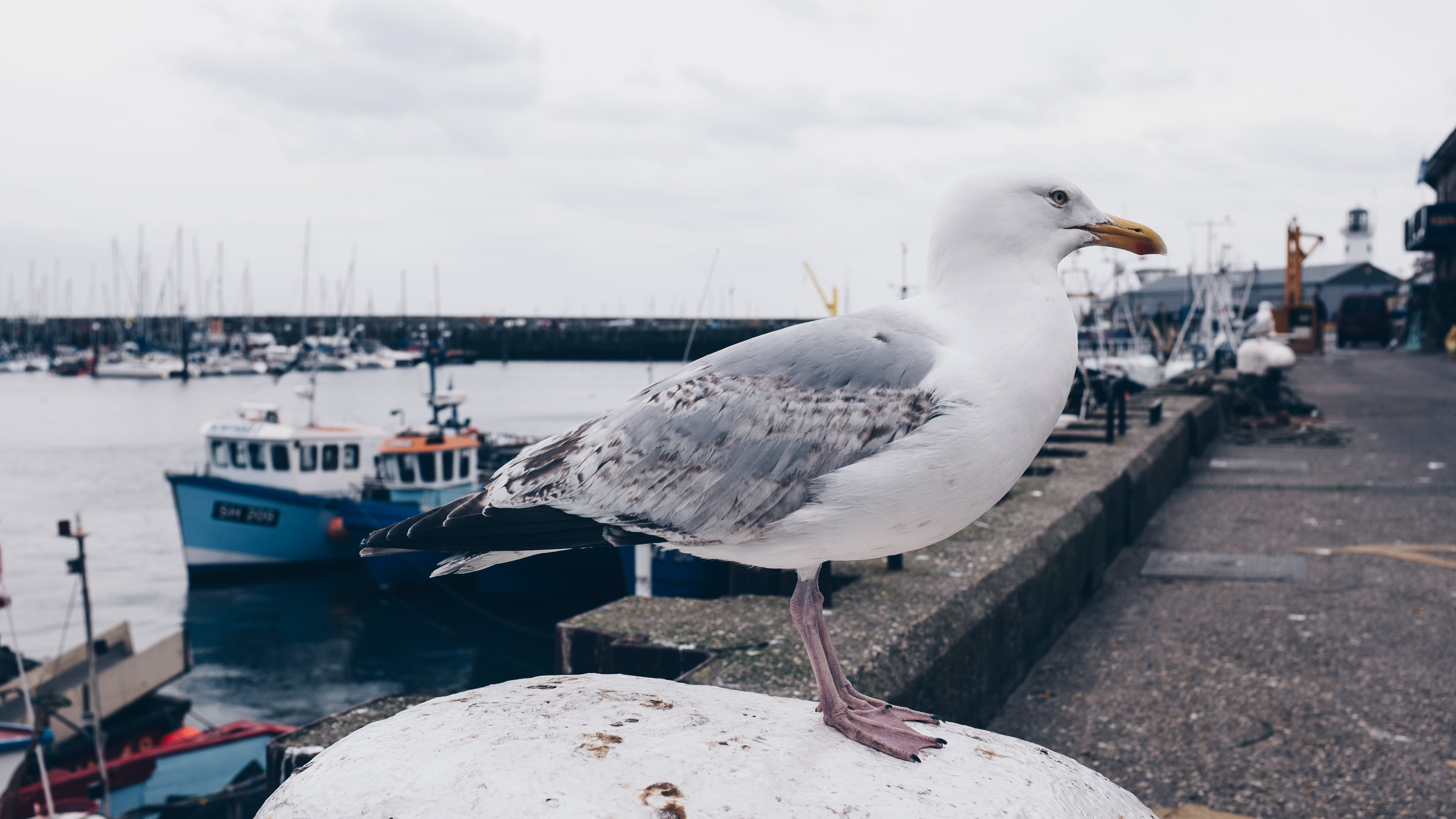 Photo of White and Gray Seagull Bird