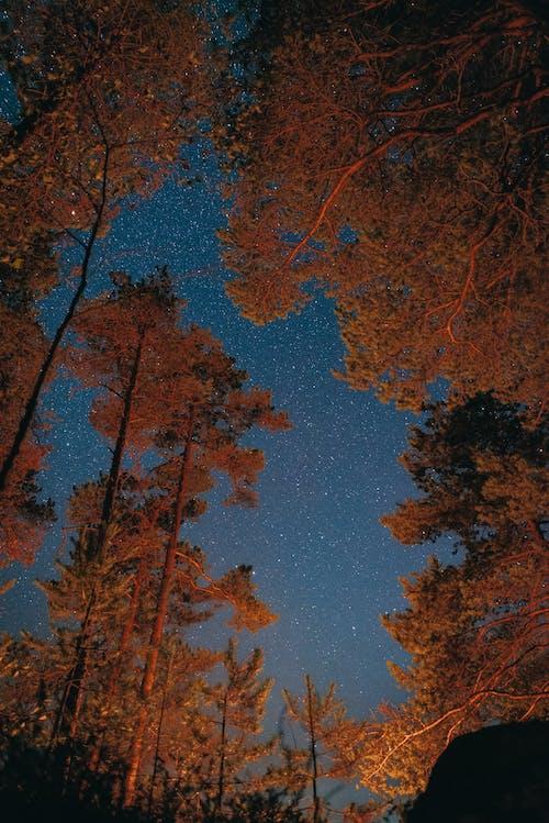 Immagine gratuita di alberi, alto, arancia