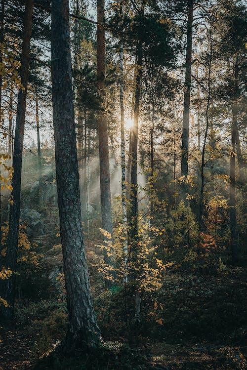 Sunlight peeking through trees in forest
