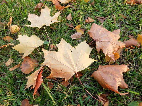 Бесплатное стоковое фото с желтые листья, золотые листья, опавшие листья