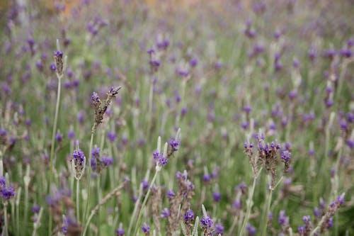 Kostnadsfri bild av blommor