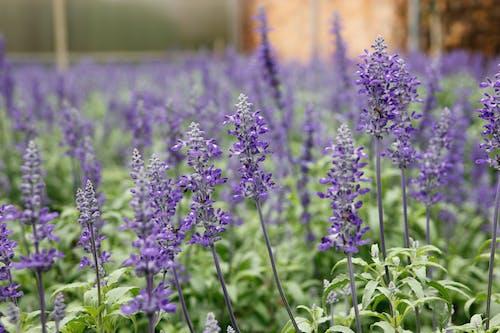 Kostnadsfri bild av aromaterapi, aromatisk, blomma, blomning