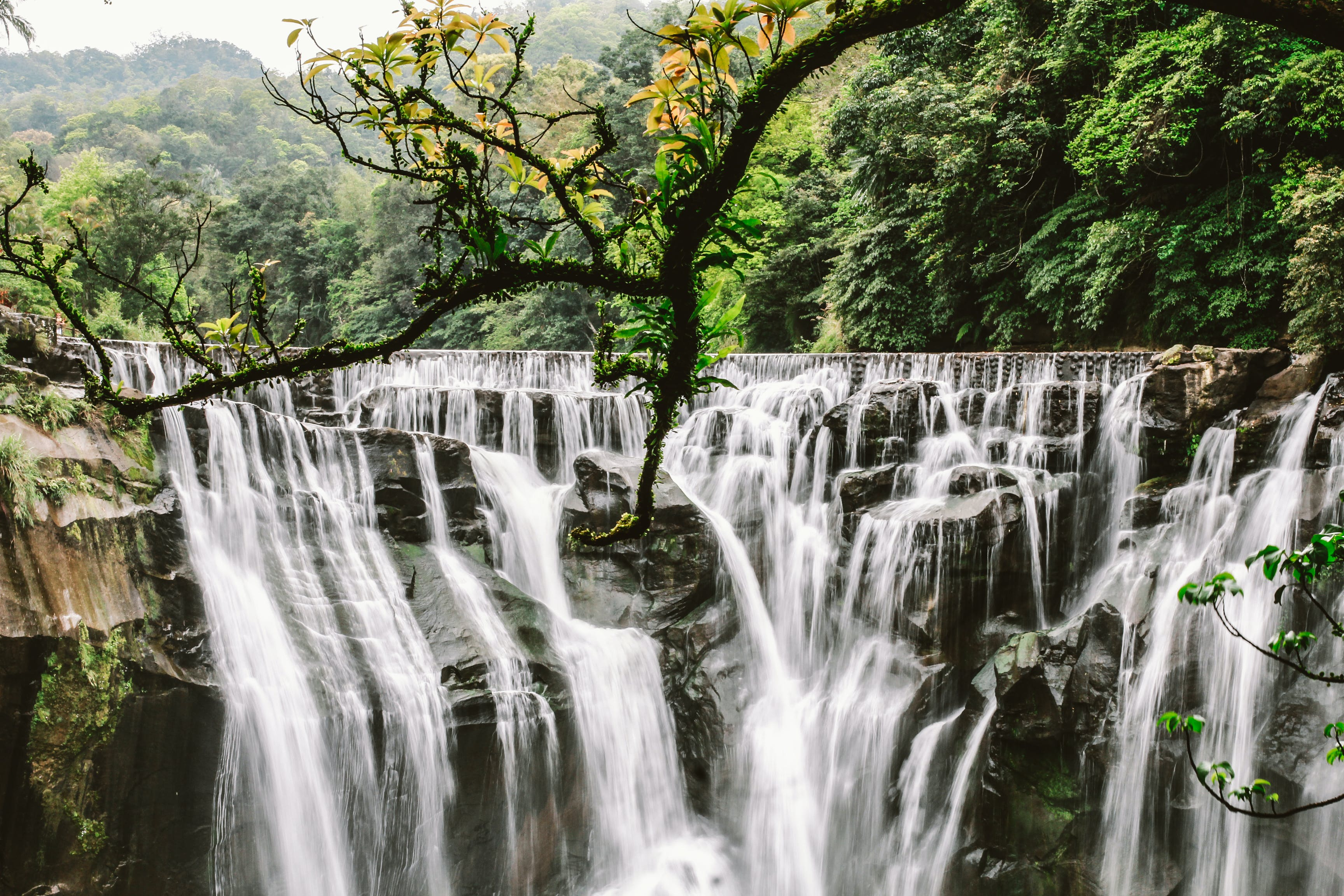 Cluster Waterfalls Surrounded With Trees