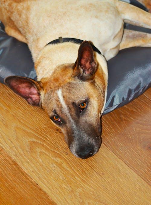 #犬#犬#犬#猫#かわいい#かわいい#美人#美人#美人の無料の写真素材