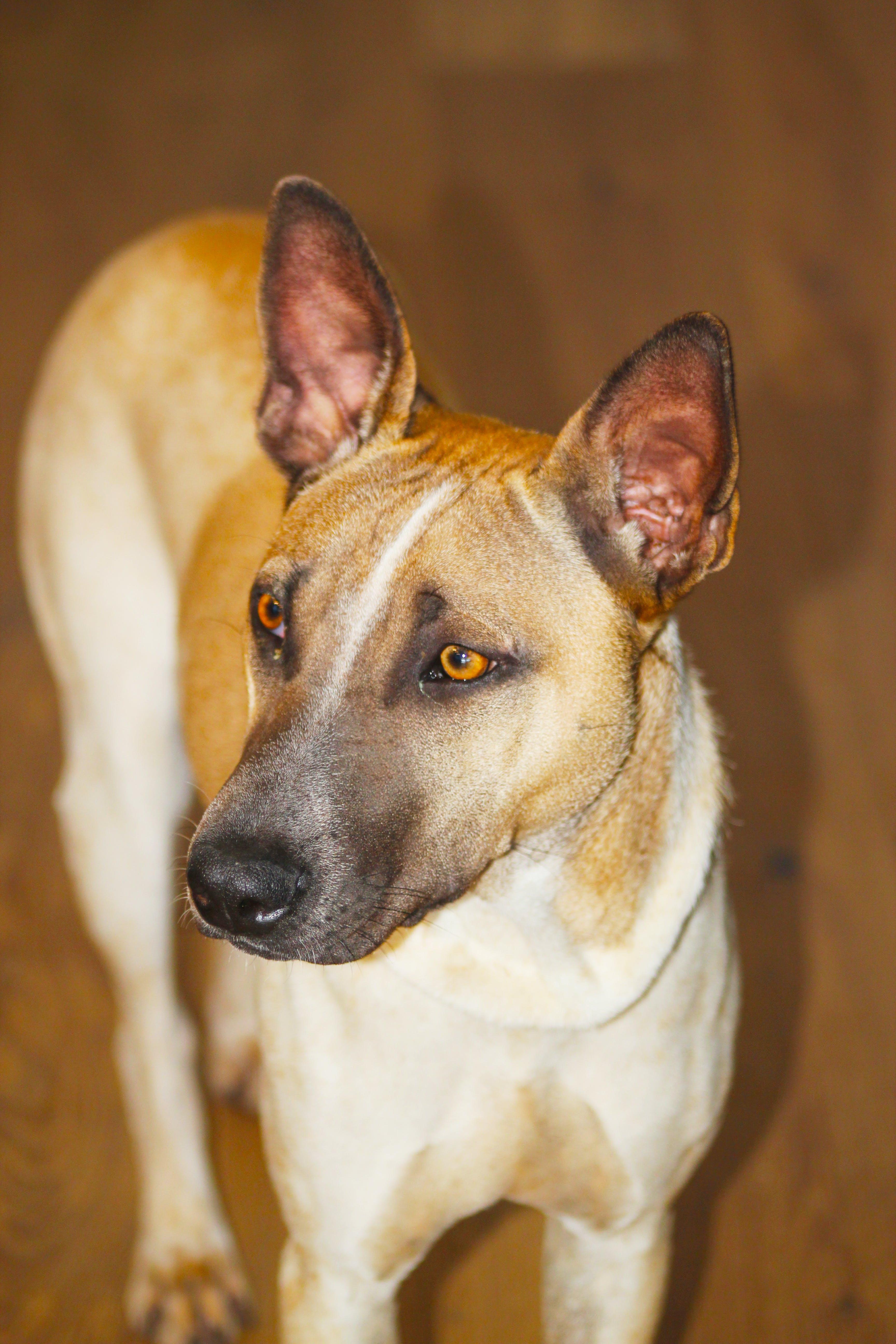 Free stock photo of #dog#DOG#pat#PAT#cute#CUTE#beauty#BEAUTY#MYDOG
