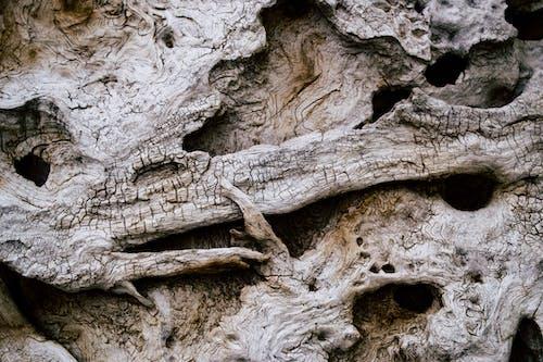 Kostnadsfri bild av textur, trä, vittrade