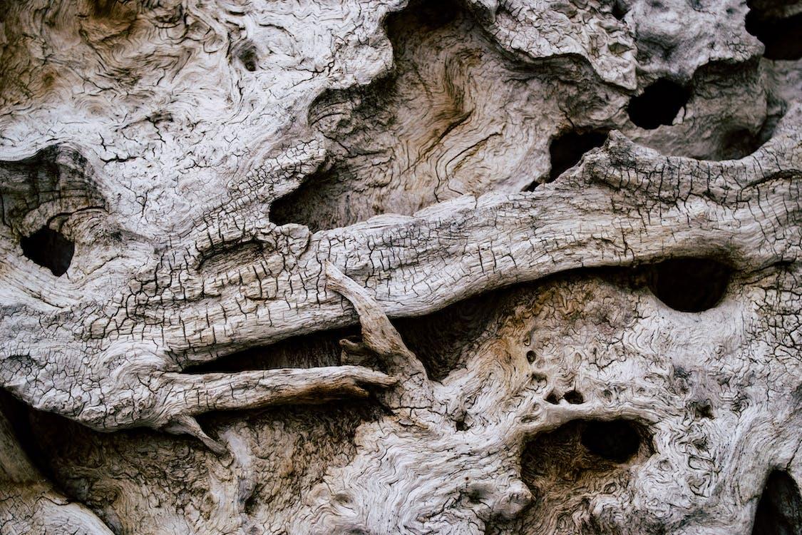 textur, trä, vittrade