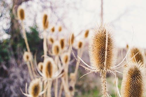 Foto d'estoc gratuïta de espinós, flora, florir, flors