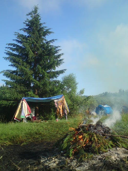 Photo of Pine Tree Leaves Bonfire