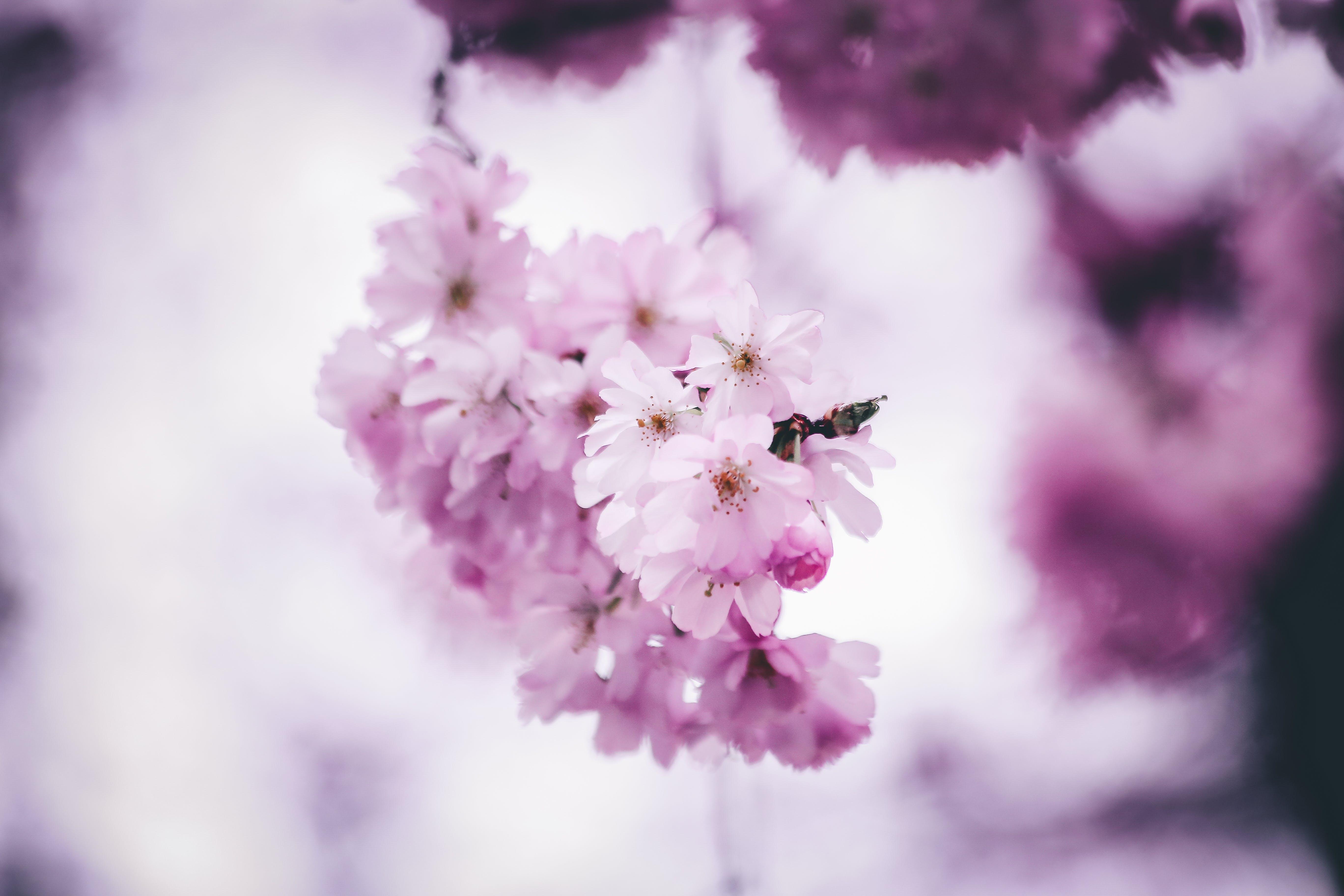 Gratis lagerfoto af blomster, flora, forårsblomster, kronblad
