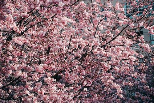 Základová fotografie zdarma na téma flóra, jarní čas, jarní květiny, kvést