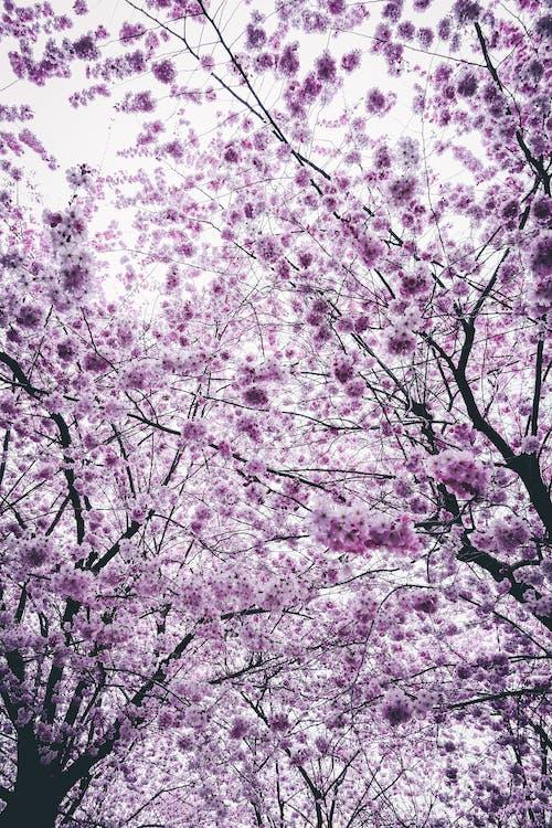 bitki örtüsü, çiçek, Çiçekler, dal içeren Ücretsiz stok fotoğraf