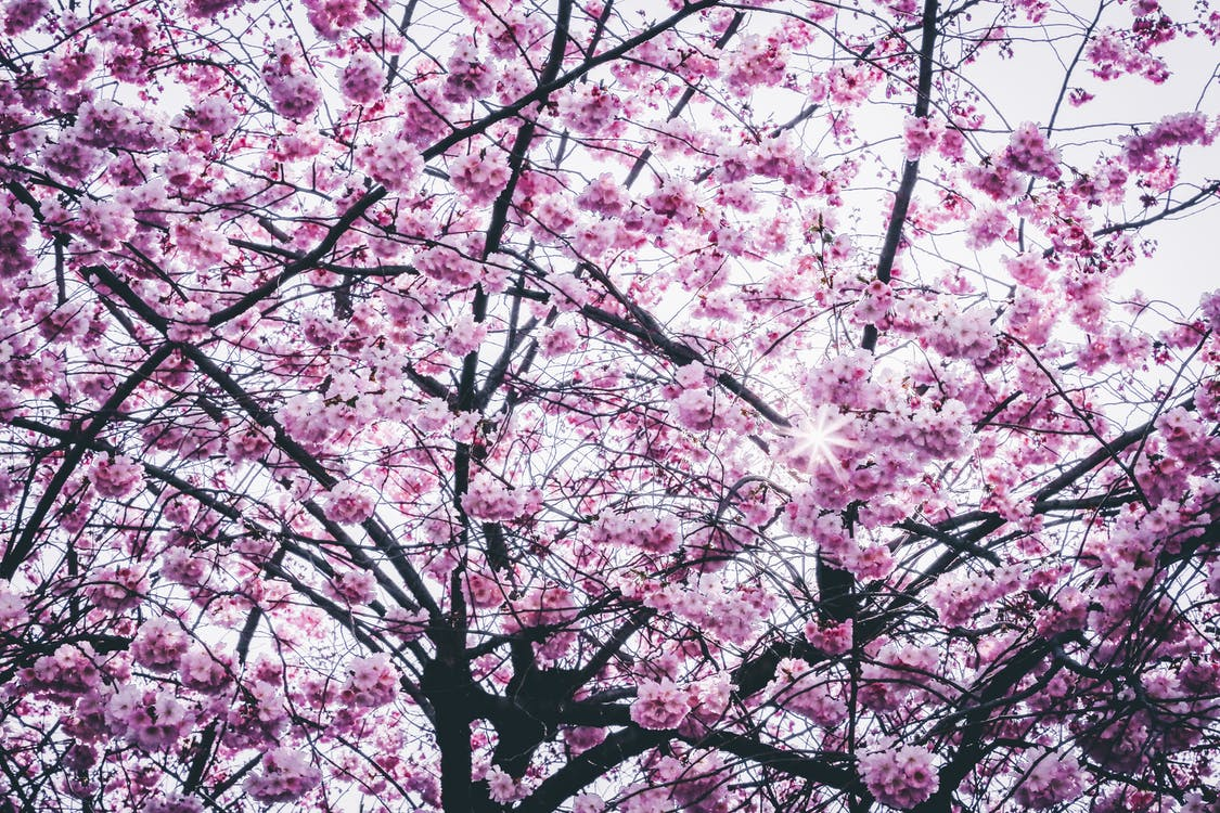 blomster, fjeder, flora