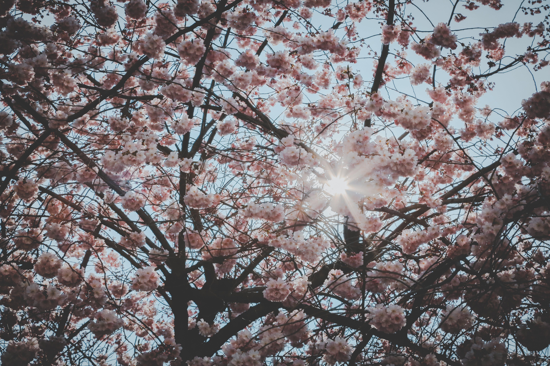 blomster, flora, forår