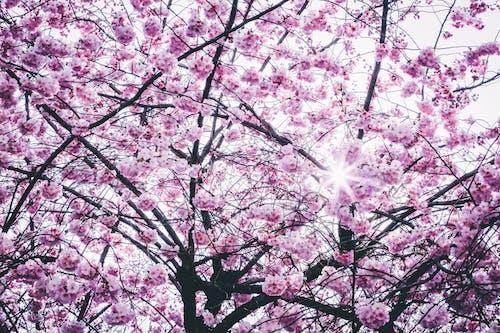 Gratis lagerfoto af blomster, fjeder, flora, forårsblomster