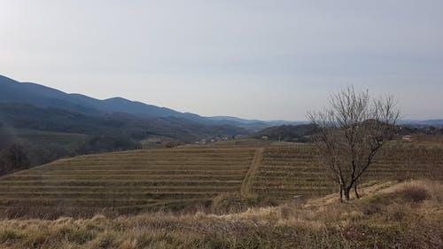 Základová fotografie zdarma na téma krajina, vinice